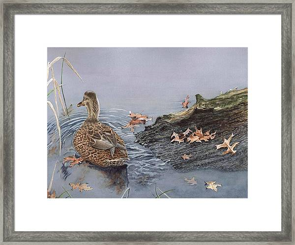 The Duck And The Alligator Framed Print