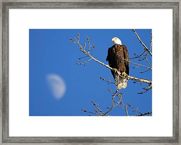 The Eagle Has Landed Framed Print