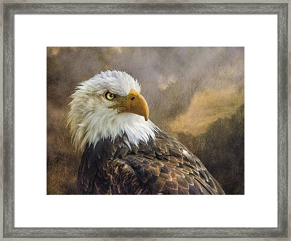 The Eagle's Stare Framed Print