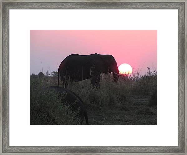 The Elephant And The Sun Framed Print