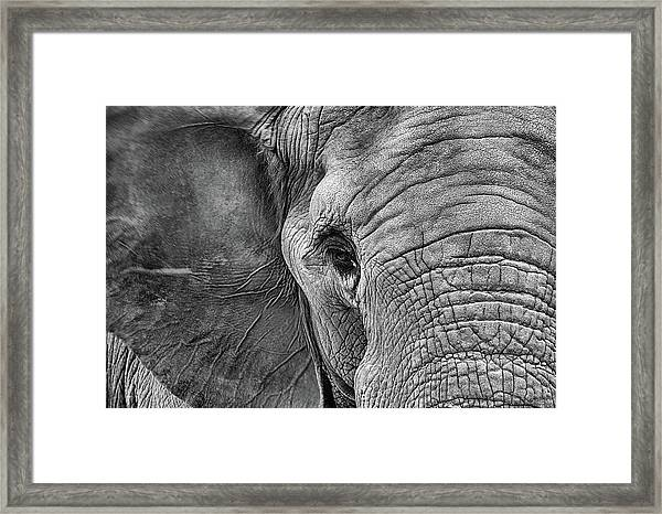 The Elephant In Black And White Framed Print
