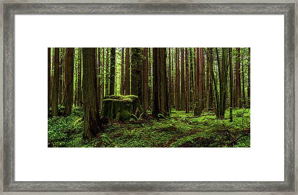The Emerald Forest Framed Print