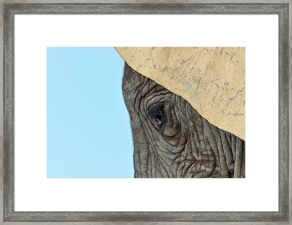 The Eye Of An Elephant Framed Print