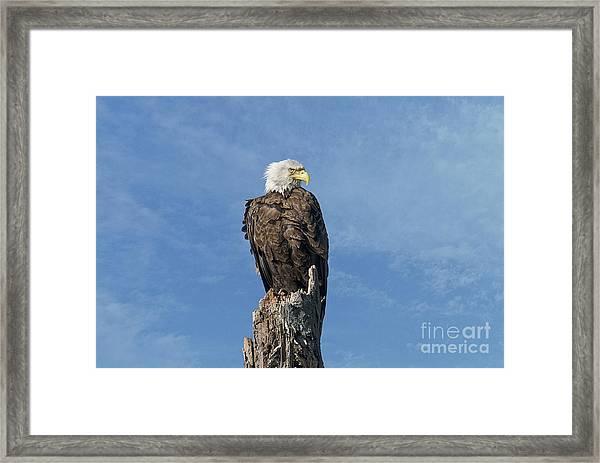 The Eye Of Freedom Framed Print