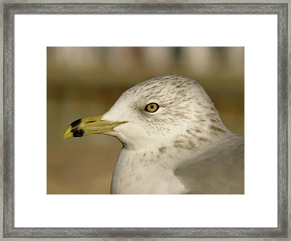 The Eye Of The Seagull Framed Print