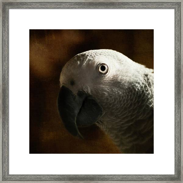 The Eyes Are The Windows To The Soul Framed Print