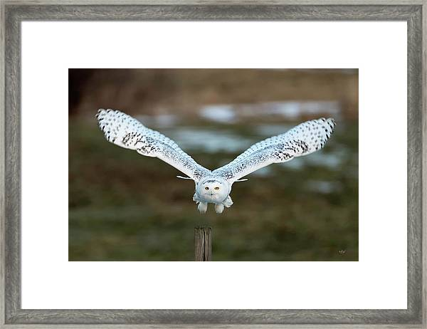 The Eyes Of Intent Framed Print