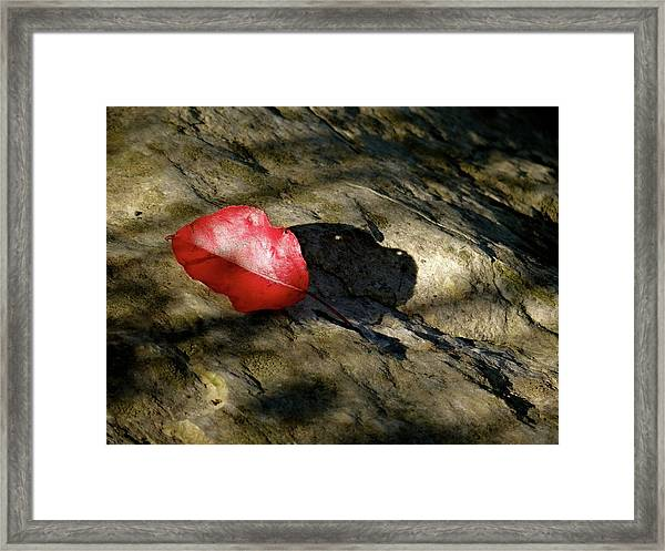 The Fallen Leaf Framed Print