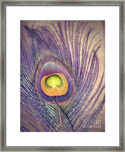 The Feather In Colour Framed Print