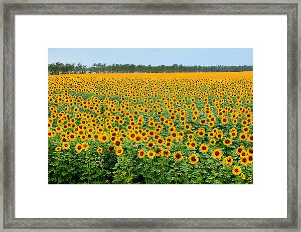 The Field Of Suns Framed Print