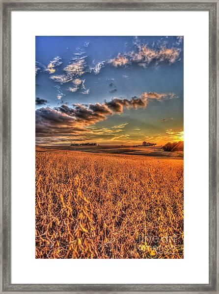 The Fleeting Sunset Missouri Soybean Farming Art  Framed Print