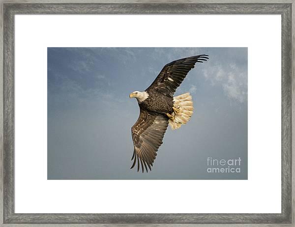 The Flight Framed Print