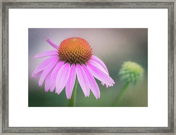 The Flower At Mattamuskeet Framed Print