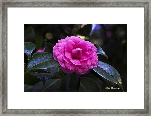 The Flower Signed Framed Print