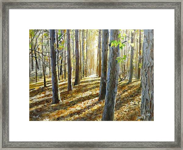 The Forest And The Trees Framed Print