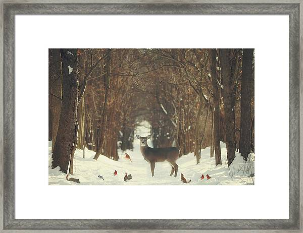 The Forest Of Snow White Framed Print
