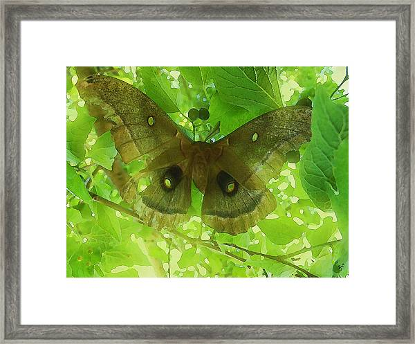 The Fourth Day-a Dying Giant.. Framed Print