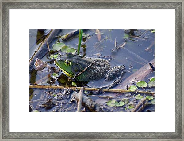 The Frog Remains Framed Print