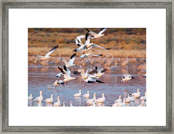 Framed Print featuring the pyrography the Gathering by Michael Lucarelli