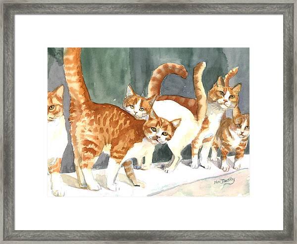 The Ginger Gang Framed Print