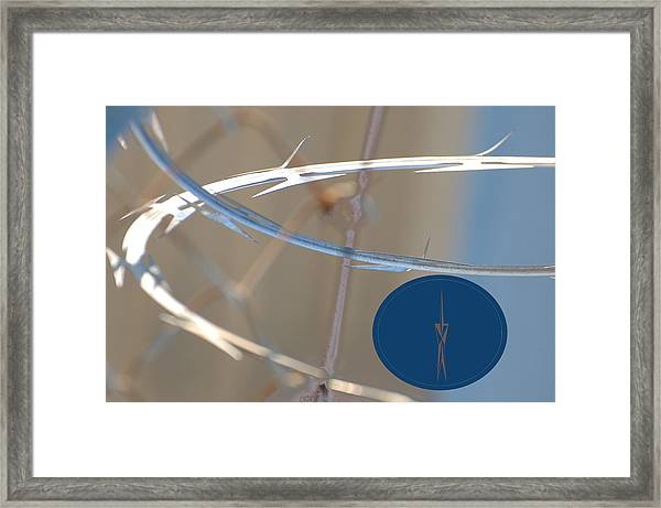 The Glint Of An Eye Framed Print by Jean Booth