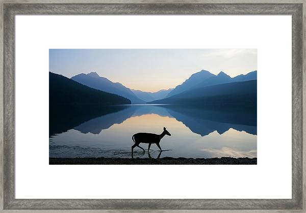 The Grace Of Wild Things Framed Print