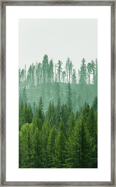 The Green And The Not So Green Framed Print