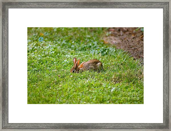 The Greener Grass Framed Print