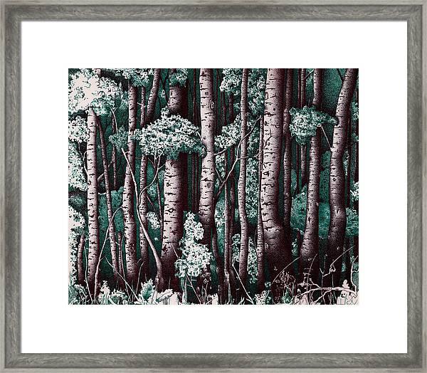 The Grove At Sand Creek Framed Print