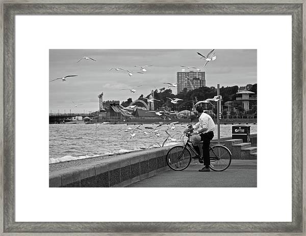 The Gull Man Framed Print