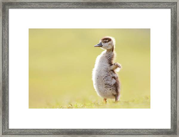 The Happy Chick - Happy Easter Framed Print