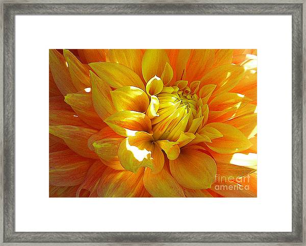 The Heart Of A Dahlia Framed Print