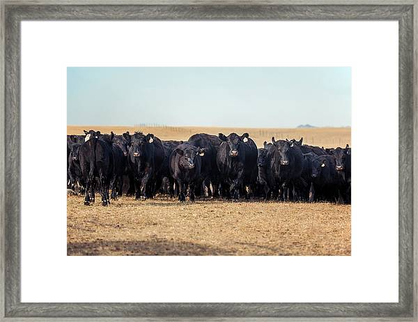 The Herd Rushes In Framed Print
