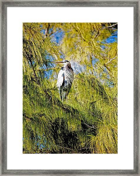 The Heron's Whiskers Framed Print