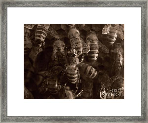 The Hive Framed Print
