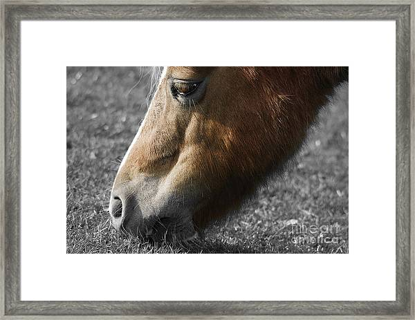 The Hungry Horse Framed Print