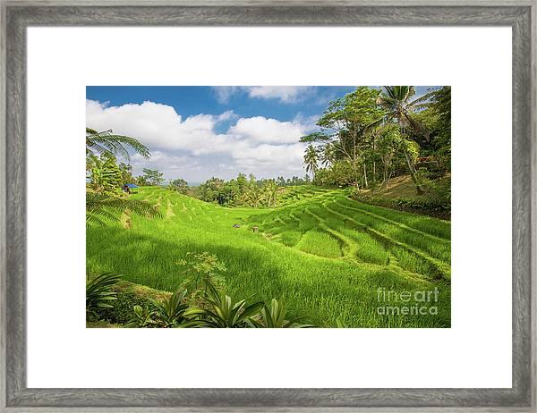The Island Of God #14 Framed Print