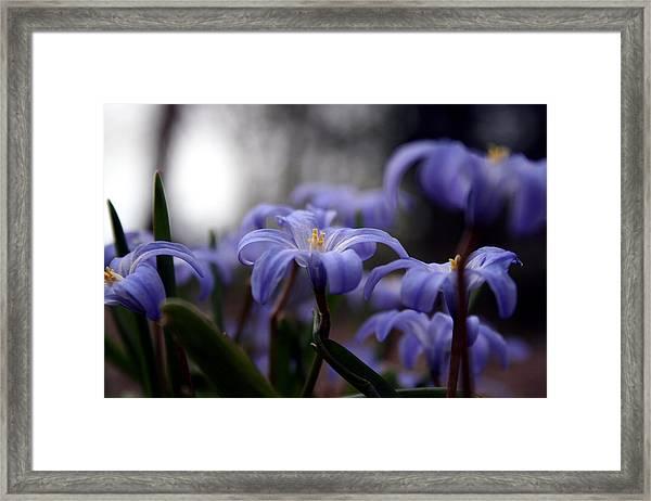 The Joy Of Springtime Framed Print