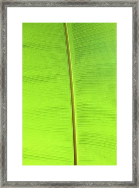The Jungle Illuminated Framed Print