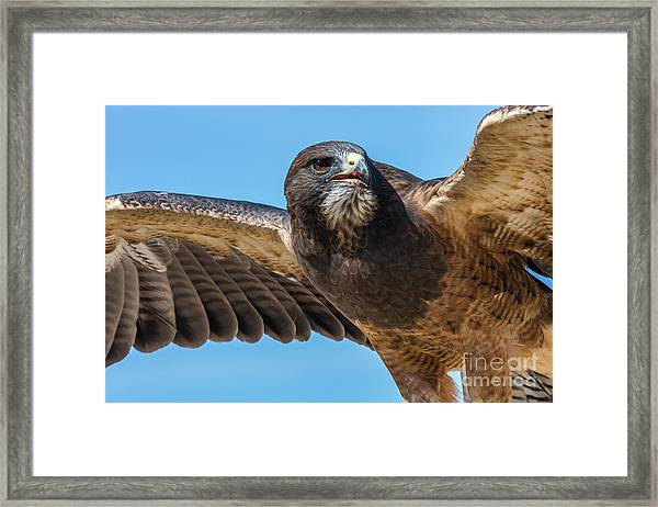 The Kill Wildlife Art By Kaylyn Franks Framed Print