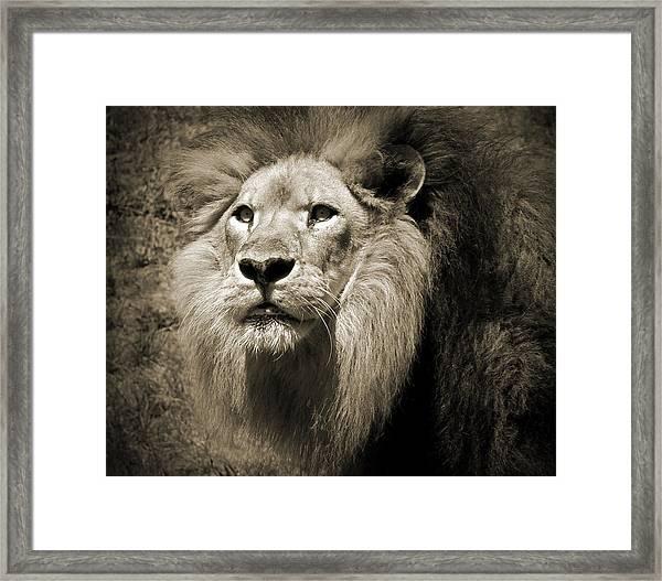 The King II Framed Print
