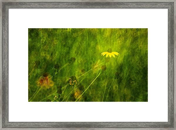 The Last Black-eyed Susan Framed Print
