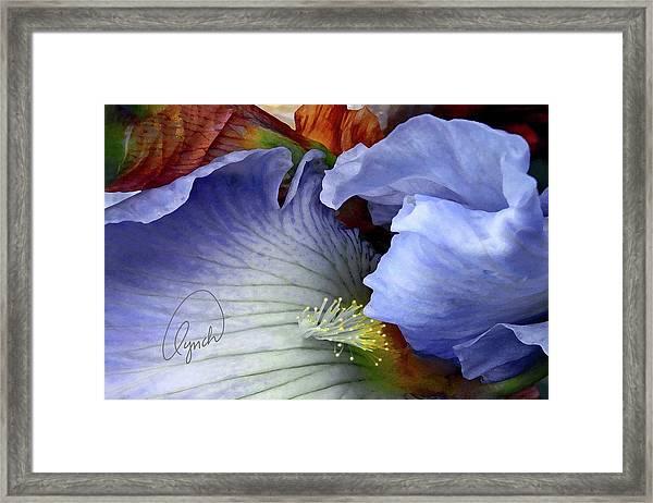 The Last Iris Framed Print