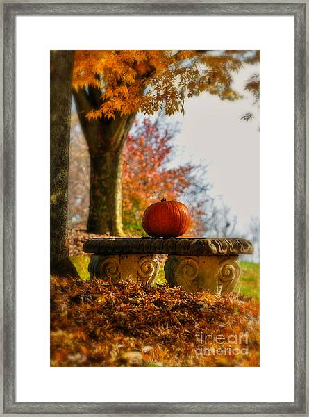 Framed Print featuring the photograph The Last Pumpkin by Lois Bryan