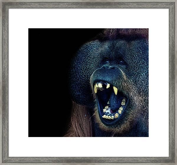 The Laughing Orangutan Framed Print
