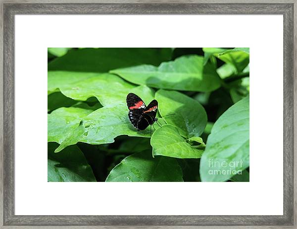 The Leaf Is My Plate Framed Print