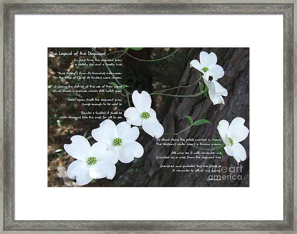 The Legend Of The Dogwood Framed Print