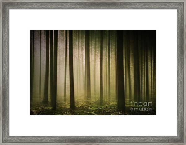 The Light In The Woods Framed Print