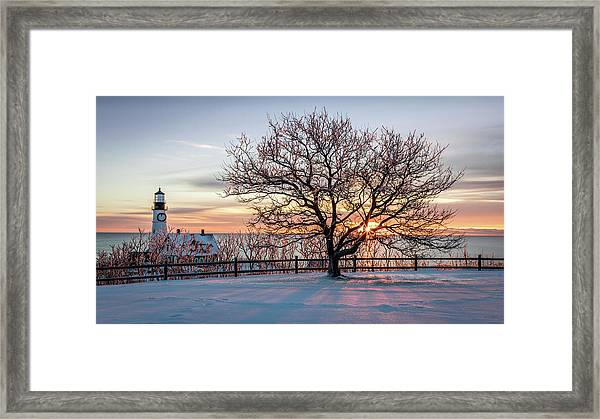 The Lighthouse And Tree Framed Print