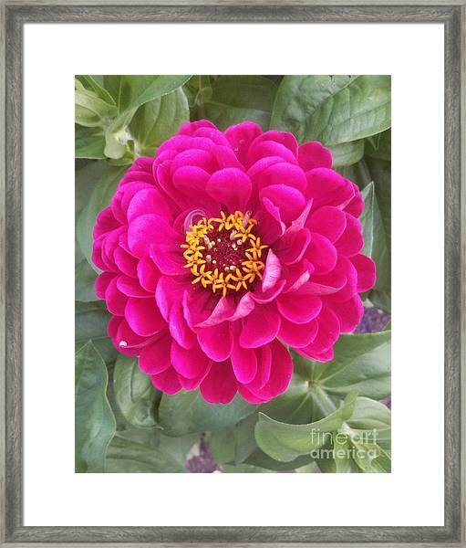 The Little Big Things Framed Print